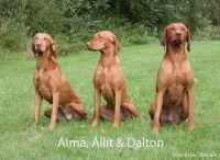Alma_llt__Dalton_in_Denemarken