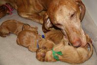 Alma pups 1e week 2