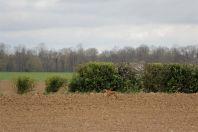 Frankrijk veldwerk 2014 maart 4